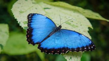 Tillid og sommerfugleeffekter
