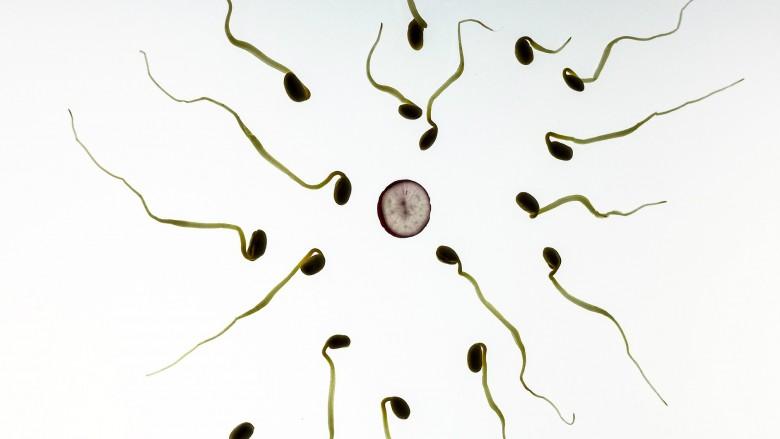 Fertilitet