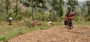 Marker i Rubura klargøres til såning.